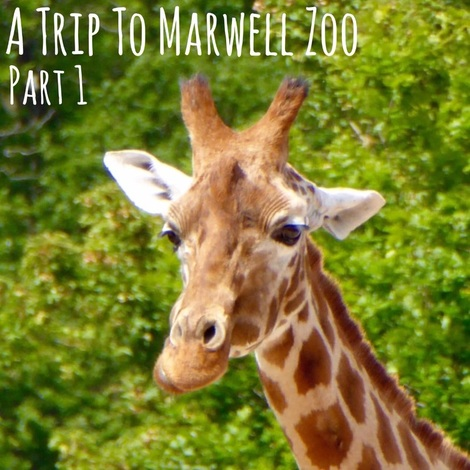 A Trip To Marwell Zoo